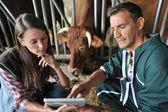 农夫和兽医检查母牛 — 图库照片