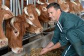 Portrait d'agriculteur souriant avec des vaches en arrière-plan — Photo