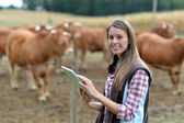 Woman farmer in front of cattle using tablet — Stock Photo