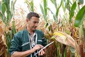 Granjero de comprobación en los cultivos de maíz — Foto de Stock