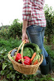 Closeup of basket full of fresh vegetables — Stock Photo