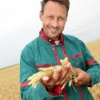 Farmer holding wheat ears in cereal field — Stock Photo
