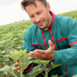 Farmer looking at sunflower plant - Stock Photo