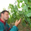 Winegrower standing in vineyard - Stock Photo