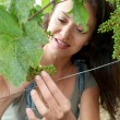 Woman observing grapes in vineyard - Stock Photo