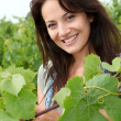 Portrait of smiling winegrower in vineyard - Stock Photo