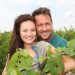 Happy couple of winegrowers in vineyard  — 图库照片