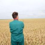 Farmer standing in wheat field in spring season — Stock Photo