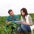 Stock Photo: Farmer and researcher analysing corn plant