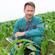 Farmer with electronic tablet analysing corn field — ストック写真