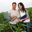 Reserachers working in corn field - Stock Photo