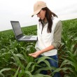 Agronomist examining plant in corn field  — Stock Photo