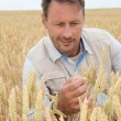 Stock Photo: Portrait of agronomist analysing wheat ears