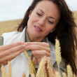 Woman agronomist looking at wheat ears — Stock Photo