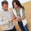 Team of agronomists analysing wheat cereal in field - Stock Photo