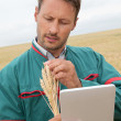 Stock Photo: Farmer with electronic tablet analysing wheat ear