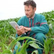 Stock Photo: Farmer with electronic tablet analysing corn field