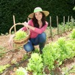 Smiling woman in vegetable garden - Photo