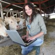 Veterinarian in barn with laptop computer — Stock Photo