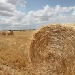 Hay bales in cultivated field  — Stock Photo