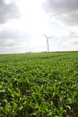 View of wind turbines in corn field — Stock Photo