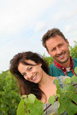 Happy couple of winegrowers in vineyard — Stock Photo