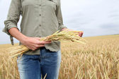 Closeup of hand holding wheat ears — Stock Photo