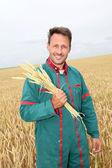 Rolnik posiadający pszenica uszy w polu zboże — Zdjęcie stockowe