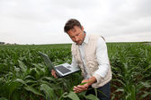 Cereales analizando agrónomo con ordenador portátil — Foto de Stock