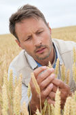 Portrait of agronomist analysing wheat ears — Stock Photo
