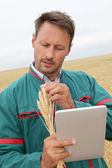 Farmer with electronic tablet analysing wheat ear — Stock Photo