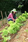 Smiling woman in vegetable garden — Stock Photo
