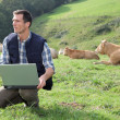 Breeder sitting in cattle field with laptop computer — Stockfoto