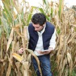Agronomist analysing cereals with electronic tablet — Stock Photo #18259429