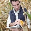Stock Photo: Agronomist analysing cereals with electronic tablet