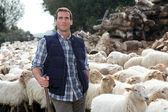 Shepherd standing by sheep in meadow — Stock Photo