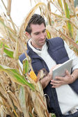 Agronomist analysing cereals with electronic tablet — Stock Photo