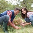 Couple in forest picking mushrooms in autumn — Stock Photo