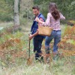 Couple in forest picking mushrooms in autumn — Stock Photo #18265003