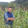 Agronomist analysing cereals in corn field — Stockfoto