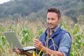 Cereali analizzando agronomo con computer portatile — Foto Stock
