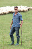 Shepherd standing in green field with sheeps — Stock Photo