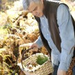 Senior man in forest looking for mushrooms — Stock Photo