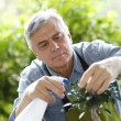 Senior man watering bonsai leaves — Stock Photo #26964873