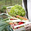 Closeup on basket full of fresh vegetables — Stock Photo