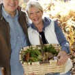 Senior couple in forest holding basket full of ceps mushrooms — Stock Photo