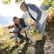 Senior couple in forest picking mushrooms — Stock Photo