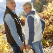 Stock Photo: Senior couple in forest holding basket full of ceps
