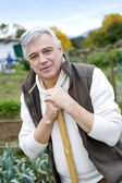 Senior man cultivating vegetables in kitchen garden — Stock Photo