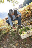Senior man knelt in forest looking for ceps — Stock Photo